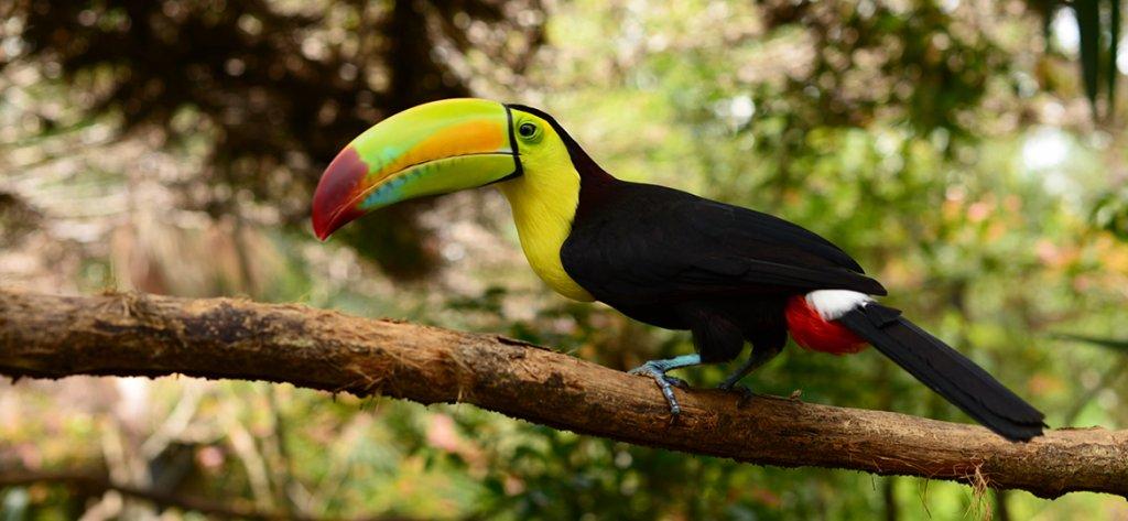 belize birding tours